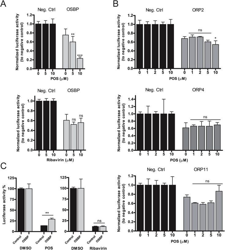Posaconazole inhibits dengue virus replication by targeting