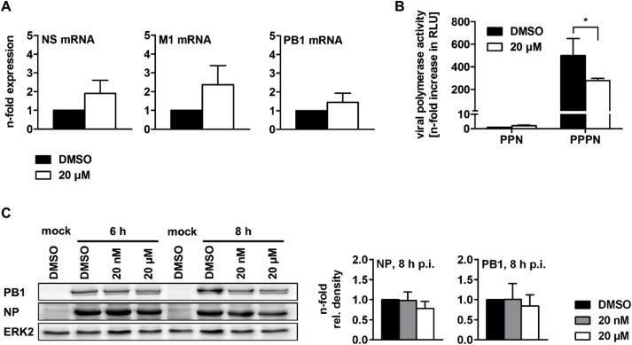 The clinically approved MEK inhibitor Trametinib efficiently blocks
