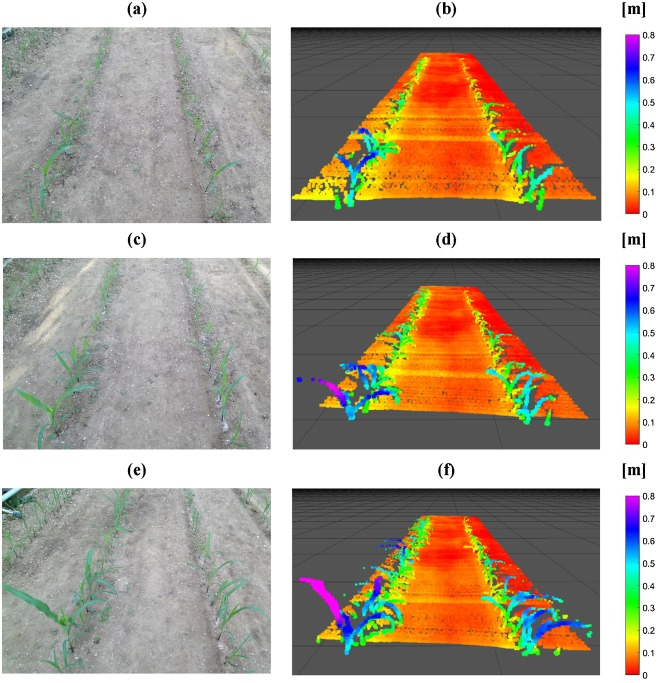 Iterative individual plant clustering in maize with
