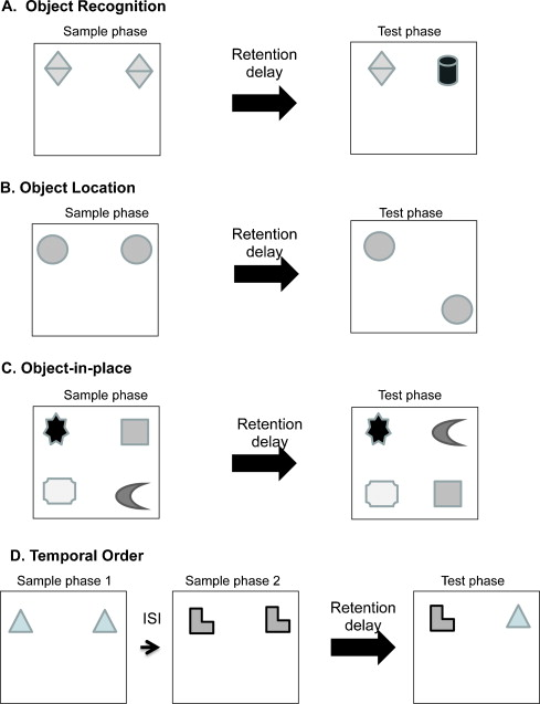 Neural circuitry for rat recognition memory - ScienceDirect