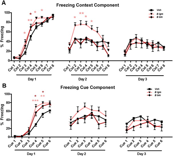 Bifidobacteria modulate cognitive processes in an anxious