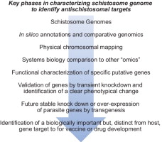 Gaining Biological Perspectives From Schistosome Genomes
