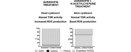 Auranofin-induced oxidative stress causes redistribution of