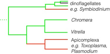 Transcription of the apicoplast genome - ScienceDirect