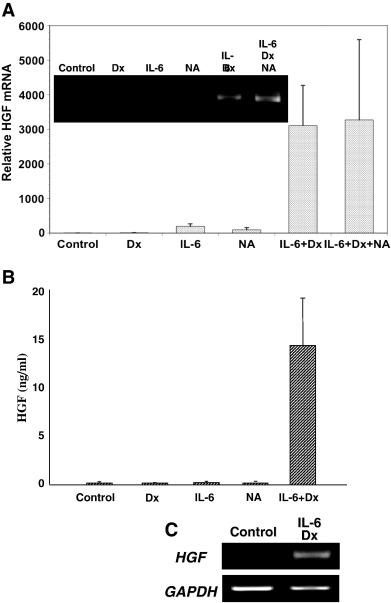 Prevention Of Reg I Induced Cell Apoptosis By Il 6dexamethasone