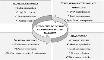 Protein secretion biotechnology in Gram-positive bacteria