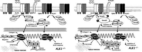 prueba de alk1 para diabetes