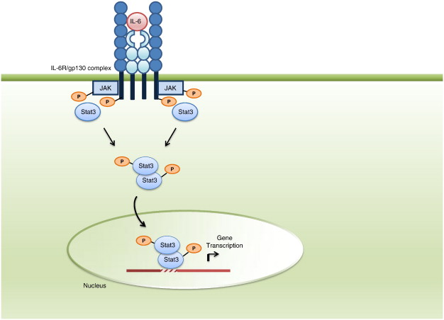 Cytokines and chemokines: At the crossroads of cell