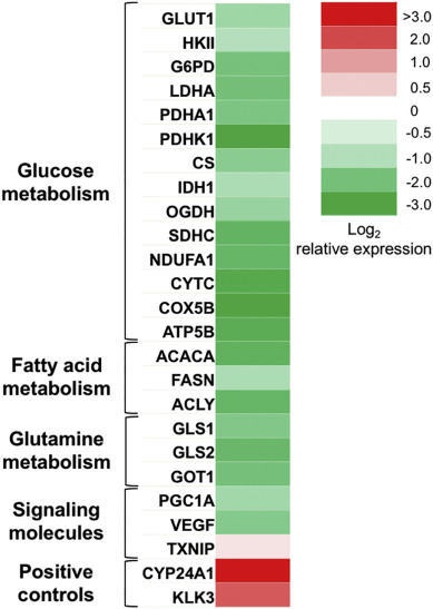 1,25(OH)2D3 disrupts glucose metabolism in prostate cancer cells
