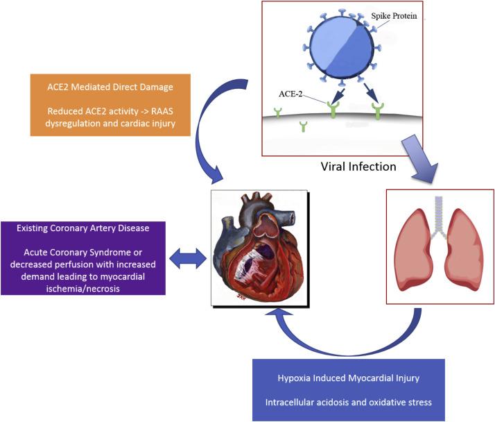 The Cardiovascular Burden Of Coronavirus Disease 2019