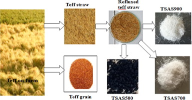 Preparation and characterisation of biosilica from teff (eragrostis