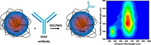 Bi-functional quantum dot-polysaccharide-antibody