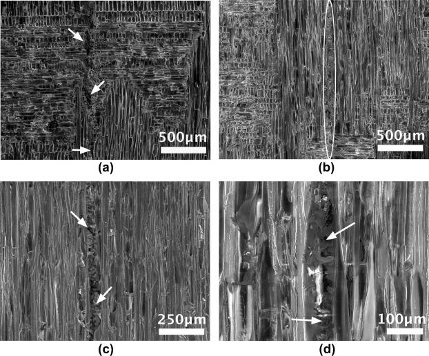 Mechanics of balsa (Ochroma pyramidale) wood - ScienceDirect