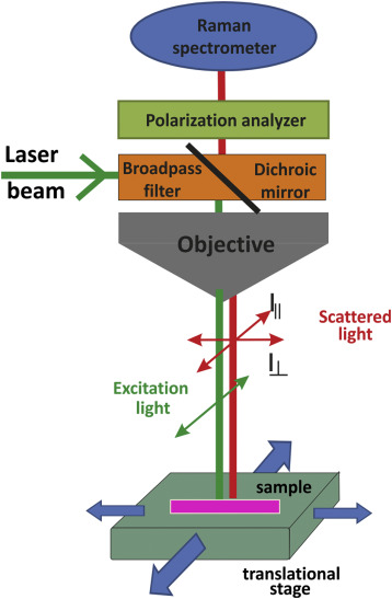 Angle Resolved and Spin Resolved Photoemission Spectroscopy with variably polarized light