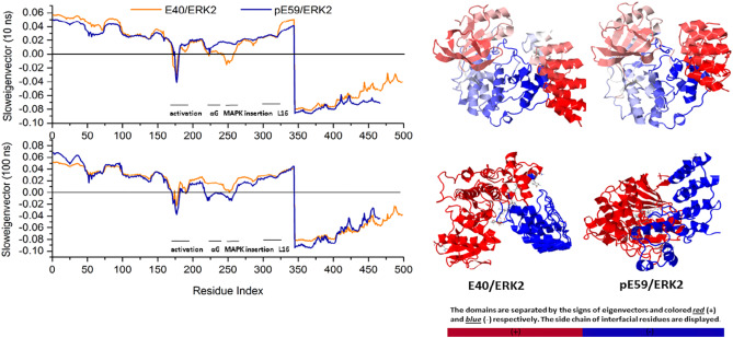 Loop dynamics behind the affinity of DARPins towards ERK2