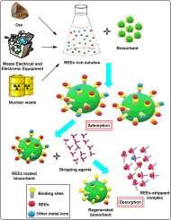 Biosorption-a green method for the preconcentration of rare
