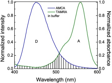 Spectroscopic method for estimation of MMP-9 enzyme