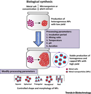 Biological Synthesis of Nanoparticles from Plants and