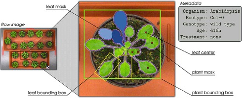 Finely-grained annotated datasets for image-based plant phenotyping