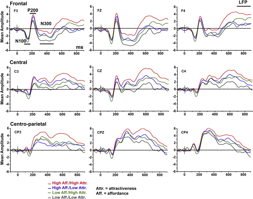 Attractiveness and affordance shape tools neural coding: Insight ...