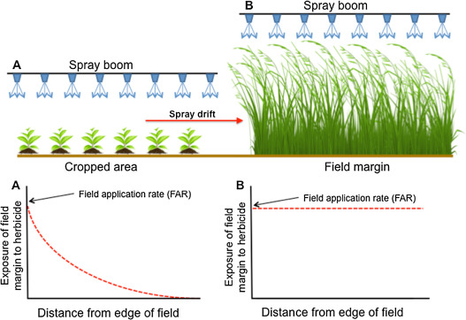 Indirect effects of herbicides on biota in terrestrial edge-of-field