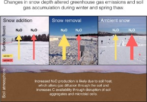 Changes in snow cover alter nitrogen cycling and gaseous