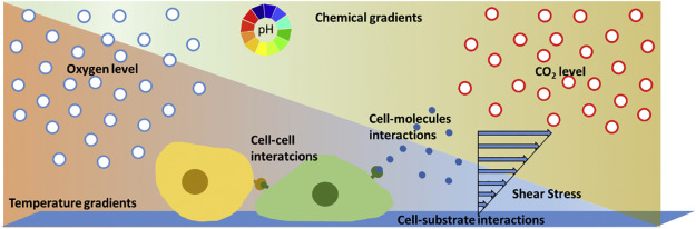 Microfluidic platforms for cell cultures and investigations