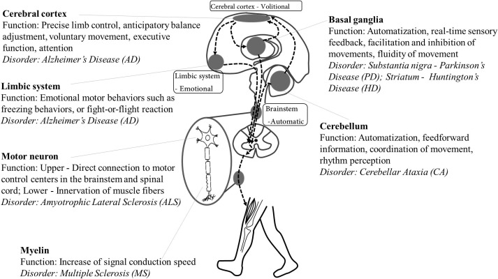 Gait variability in people with neurological disorders: A