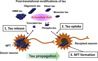Progression of Alzheimer's disease, tau propagation, and its