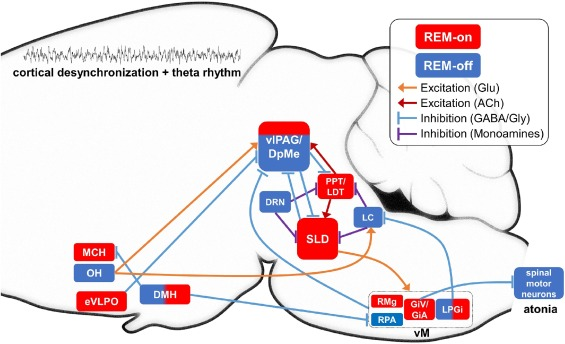 Circuit mechanisms and computational models of REM sleep