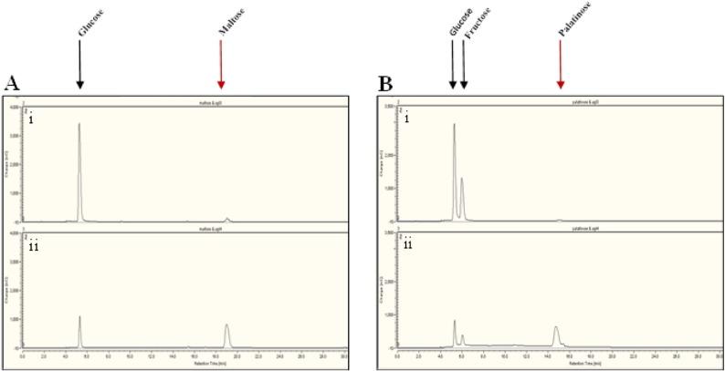 Uitgelezene Glycoside hydrolase family 13 α-glucosidases encoded by ZY-31