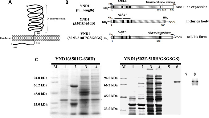 High throughput assays of leloir glycosyltransferase reactions fig 1 ccuart Choice Image