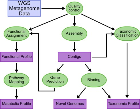 Bioinformatics for NGS-based metagenomics and the