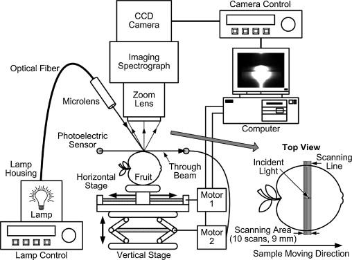 Monte Carlo Simulation For Quantification Of Light Transport