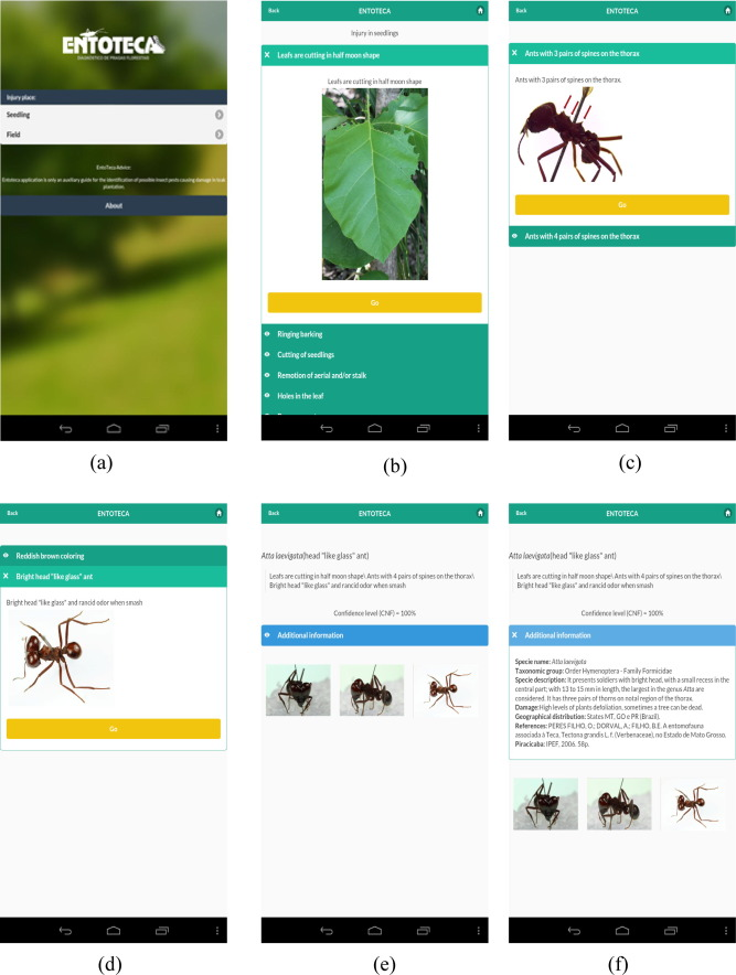 Expert system for identification of economically important insect