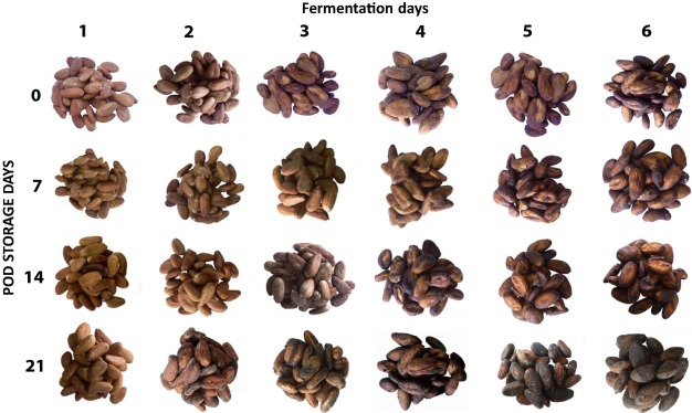 Nondestructive determination of cocoa bean quality using FT-NIR