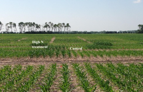 Use of corn height measured with an acoustic sensor improves