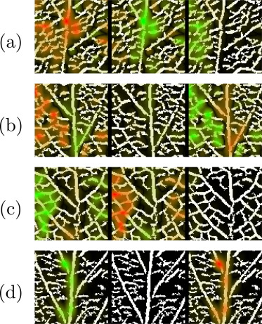 Deep learning for plant identification using vein morphological