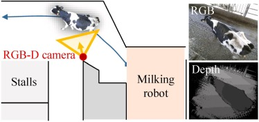 RGB-D video-based individual identification of dairy cows