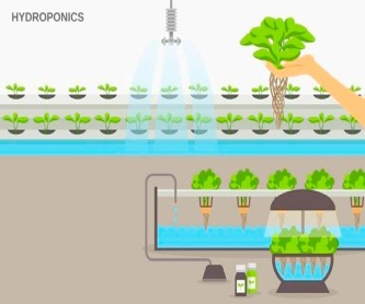 IoT based hydroponics system using Deep Neural Networks