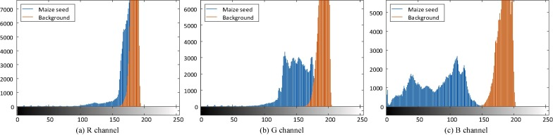Identification of haploid and diploid maize seeds using