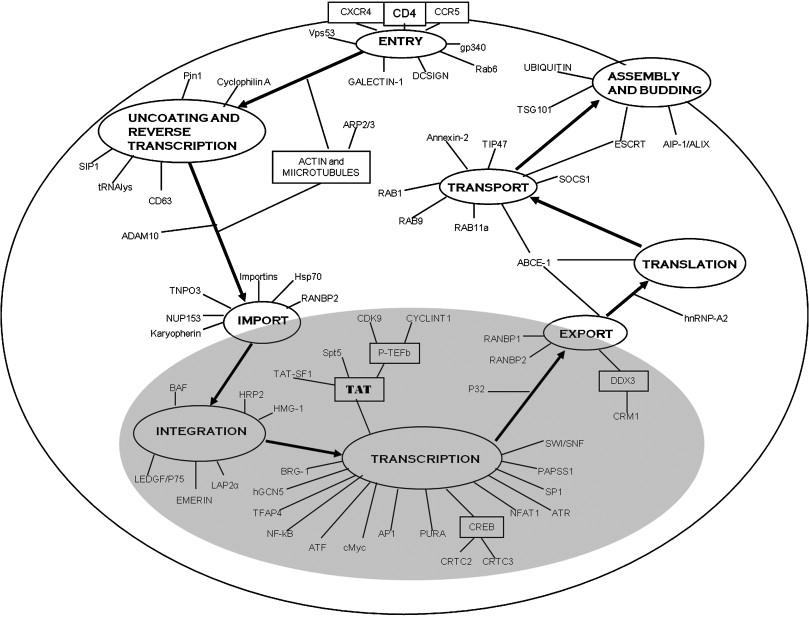 Host Factors Mediating Hiv 1 Replication