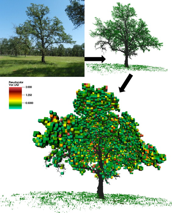 On seeing the wood from the leaves and the role of voxel size in