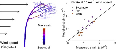 Finite element analysis of trees in the wind based on terrestrial