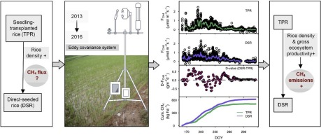 Does direct-seeded rice decrease ecosystem-scale methane emissions