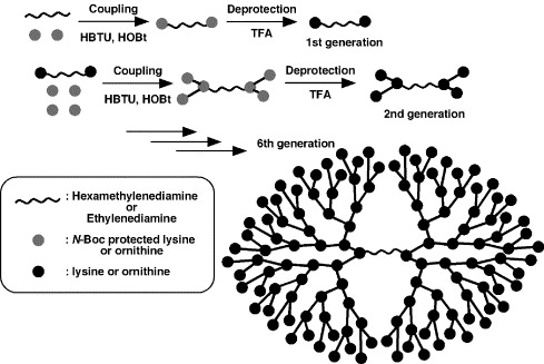 Biodistribution characteristics of amino acid dendrimers and their