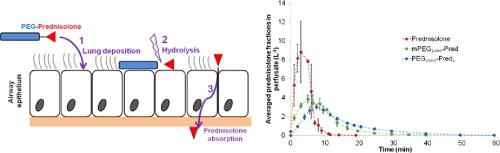 Polyethylene glycol-drug ester conjugates for prolonged