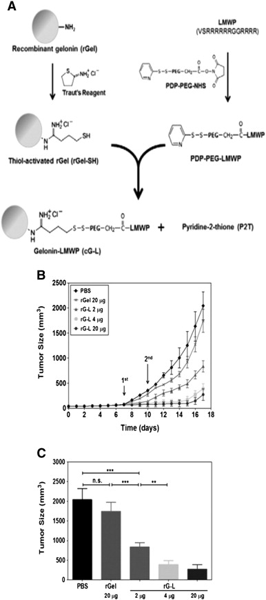 Low molecular weight protamine lmwp a nontoxic protamine download high res image 155kb ccuart Choice Image