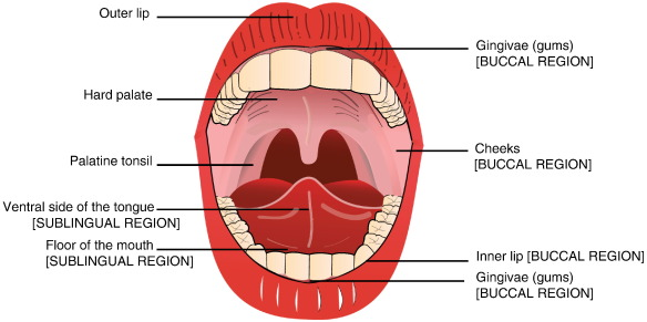Buccal And Sublingual Vaccine Delivery Sciencedirect