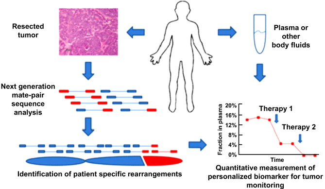 Precision Targeted Therapy Of Ovarian Cancer Sciencedirect